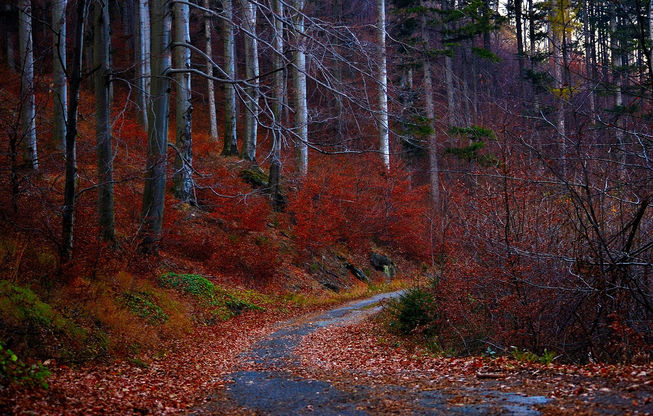 Photo wallpaper road, autumn, forest, leaves, trees, red