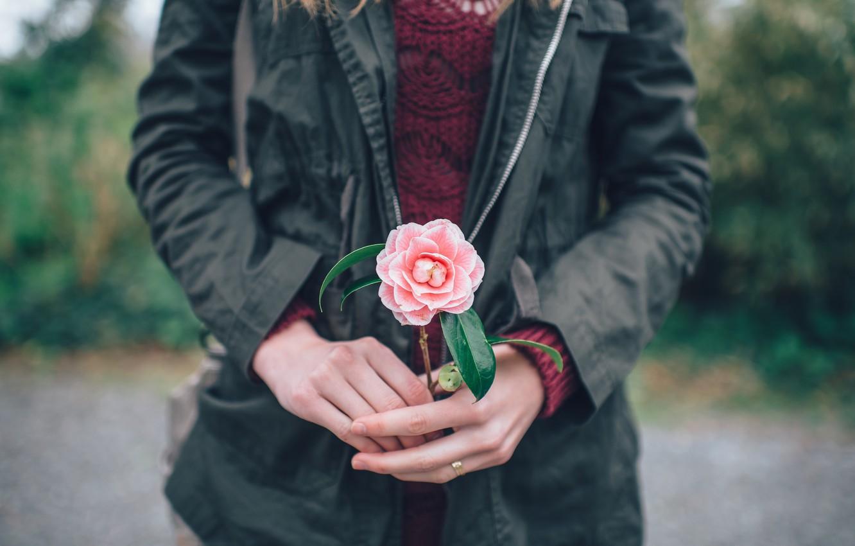Photo wallpaper flower, hands, pink petals