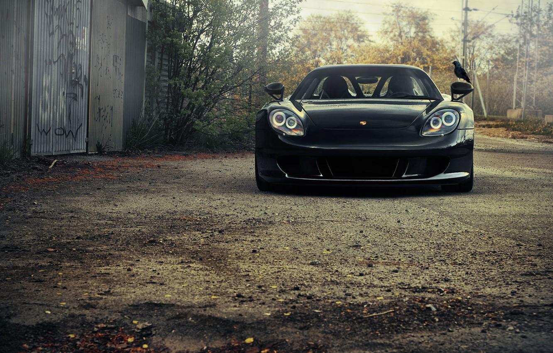 Photo wallpaper bird, Porsche, car, porsche, Porsche, Carrera GT