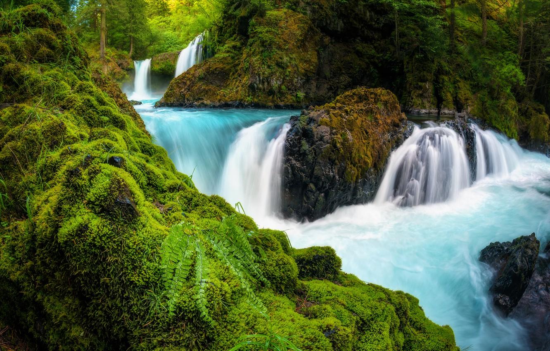 Photo wallpaper forest, river, stones, waterfall, moss, fern, cascade, Washington, Washington, Columbia River Gorge, the Columbia river ...