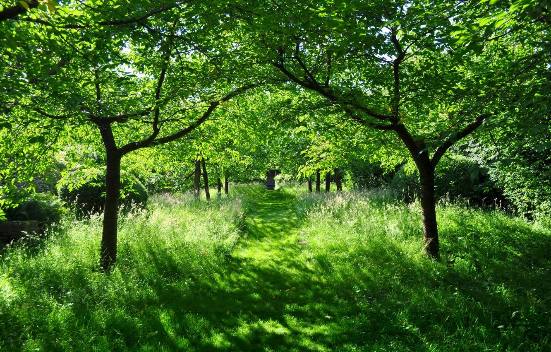 Photo wallpaper greens, summer, the sun, beauty