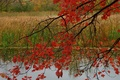 Picture autumn, forest, leaves, pond, branch, the crimson