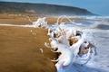 Picture sea, wave, shore, sand, beach, foam, squirt