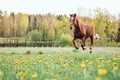 Picture summer, horse, field