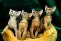 Picture kittens, Quartet, faces