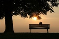 Picture bench, pigeons, sunset