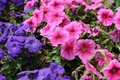 Picture flowers, color, petals, bright, summer, leaves
