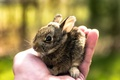 Picture hand, hare, nature