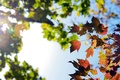 Picture the sky, branches, autumn, foliage, nature