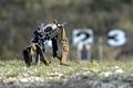 Picture assault, grass, rifle