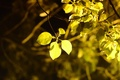 Picture leaves, macro, trees, yellow, background, tree, widescreen, Wallpaper, foliage, blur, leaf, wallpaper, leaf, widescreen, background, ...