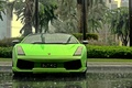 Picture palm trees, wallpapers, Lamborghini, Gallardo, supercar, Wallpaper, rain