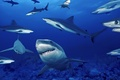 Picture sea, depth, sharks