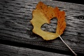 Picture autumn, leaves, creative, tree, mood, foliage, heart, leaf, heart, log, leaf, wood, heart, sheets, nail, ...