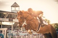 Picture sport, horse, jump