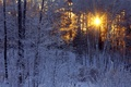 Picture rays, winter, frost, the sun, forest, birch