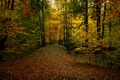 Picture bridge, forest, the bridge, leaves, fall, trail, path, colors, foliage, Autumn, autumn, falling leaves, track, ...
