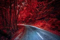 Picture road, forest, color