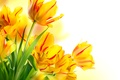 Picture spring, petals, tulips, bouquet