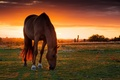 Picture pasture, horse, horse, field, sunset