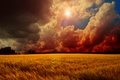 Picture clouds, wheat, the sky, field, the sun, trees, sunset
