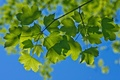 Picture summer, the sky, macro, branches, foliage