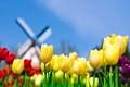 Picture the sky, yellow, Tulips, mill