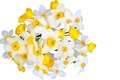 Picture flowers, freshness, beauty, bouquet, spring, white, white, yellow, yellow, flowers, beauty, Narcissus, spring, bouquet, gentle ...