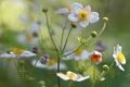 Picture flower, petals, field, meadow, plant
