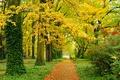 Picture road, trees, Park, landscape