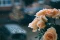Picture autumn, overcast, rain, roses, sadness, Rose, reverie, window, reflection, sadness