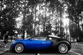 Picture color, Veyron, contrast, Bugatti
