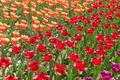 Picture flowers, the little flowers, widescreen, widescreen, widescreen, the Wallpapers, Wallpaper, tulips, HD wallpapers, full screen, ...