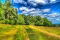 Picture the sky, clouds, trees, field, treatment, UK, Wales