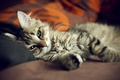 Picture cat, cat, sofa, bed, paws, Kote