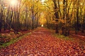 Picture nature, road, trees, leaves, tree, forest, autumn, landscape