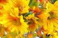 Picture flowers, petals, rendering, paint, line