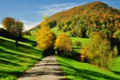 Picture green, road, trees, autumn, hill, shadows, sunlight