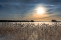 Picture reed, morning, lake, winter