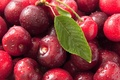 Picture macro, cherry, photo, sweet, cherry, macro, Sweet cherry, ciliege