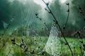 Picture macro, fog, September, web, Rosa, grass, autumn, drops