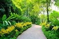 Picture garden, trees, the bushes, Botanic Gardens, greens, alley, Singapore, track