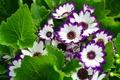 Picture flowers, nature, hem, leaves