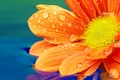 Picture water, droplets, flower