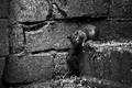 Picture look, rat, close-up, surprise, surprise, inst:newshtefan, rat, macro, look