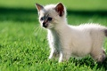 Picture grass, white, green, Kitty