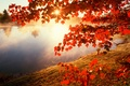 Picture autumn, leaves, the sun, branches, nature, river, photo, maple