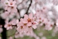 Picture Spring, beauty, Nature, Blossom, Tree