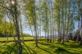 Picture mountains, Bulgaria, Bulgaria, grass, trees, sunny, birch, Sunny, nature, trees, birches, mountains, grass, nature, landscape, ...