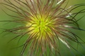Picture macro, nature, bokeh, flower